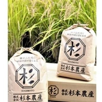 【2019年産】キヌヒカリ 精米10kg(5kg×2袋)