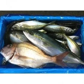 御坊産 鮮魚セット 約2.5kg