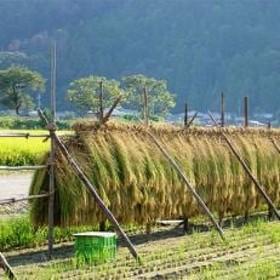 【平成30年産】特別栽培米コシヒカリ 北びわこプレミア米 18kg