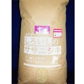 【平成30年産】白石産ササニシキ玄米13kg[4206-054]