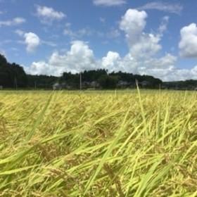 【平成30年産】特別栽培米 多古米コシヒカリ(精米3kg+玄米3kg)