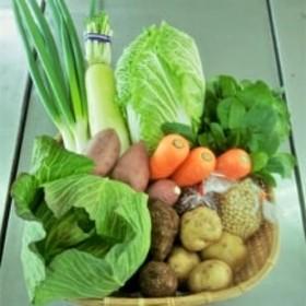 【JA菊池 大津中央支所 とれたて市場】季節の野菜セット