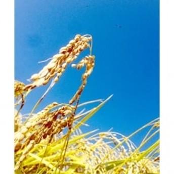 登米市米山町産特別栽培米(ひとめぼれ・ササニシキ)食べ比べセット 各2kg(計4kg)