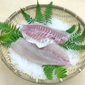 養殖タイ スキンレスフィレ【カマ無し・皮無し3枚下し】約500g