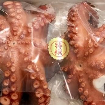 八幡浜発!竹中水産のたっぷり「浜茹で地蛸」三昧!たっぷり2.5kg前後