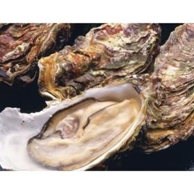 釧路管内産活牡蠣(Lサイズ)10個入[Ka302-A015]