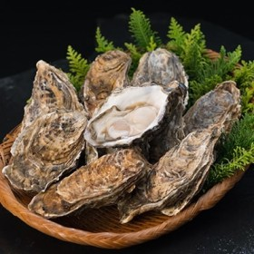 【ぷりっぷりで濃厚!】釧路管内産【活】牡蠣(特大)10個[Ka402-A088]