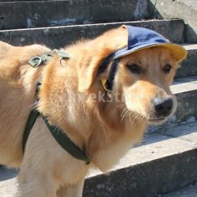 デミ犬の野球帽バイザーの帽子調節可能なsunbonnetサンキャップ耳の穴