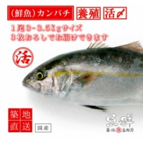 養殖 カンパチ1尾(3-3.5kg前後サイズ)(国産) 冷蔵便 築地直送 [鮮魚]