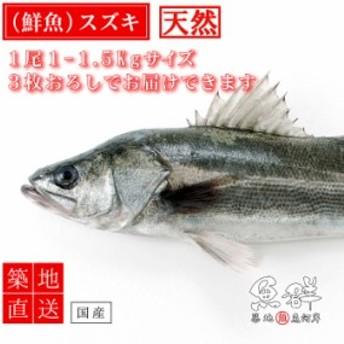 天然 スズキ1尾(1-1.5kg前後サイズ)(国産) 冷蔵便 築地直送 [鮮魚]