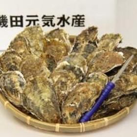 殻付き牡蠣(かき)Lサイズ20個入(加熱容器付)