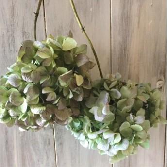 紫陽花ドライフラワー枝付き2本