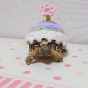 リクガメ服ピンクお花(S)