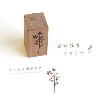 植物採集スタンプ:『ユーカリポポラス』