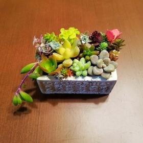 多肉植物★カラフルグレー鉢★寄せ植え