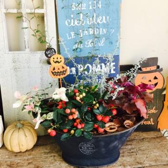 新作 【チェッカーベリー入り 秋冬寄せ植え】カッコイイおしゃれな植物 アンティーク風黒ブリキ鉢