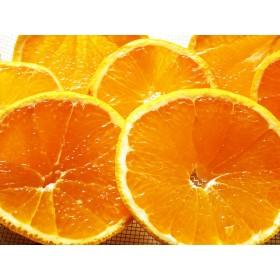 柑橘の王様 完熟デコポンジャム (200g) 無添加