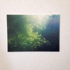 和紙プリントの優しいパネル写真(A4)*深碧の森
