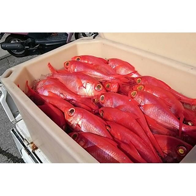 南伊豆の漁師直送一本釣り金目鯛