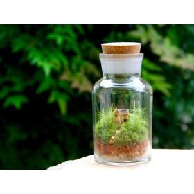小さな家の景色 -苔のテラリウム -(M)