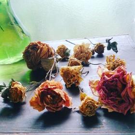 新作 gardenrose バラのドライフラワー10本