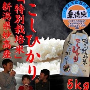 【無洗米】新潟産コシヒカリ 特A 特別栽培米コシヒカリ 5kg《 30年産 2018年 お米 5kg 高級米 5キロ 美味しいお米 》
