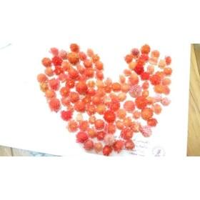 sale 15%OFF 千日紅ヘッド(warm color)約120個