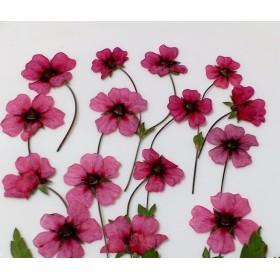 押し花素材 (イチゴのような花)