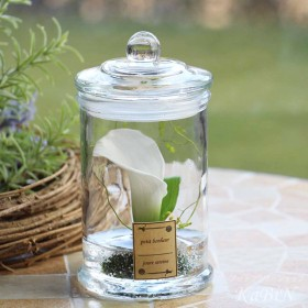 テラリウム風植物標本 一輪のカラー 保存瓶アレンジ size:M M0224001