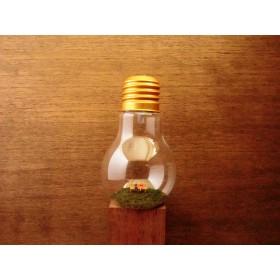 light bulb ~小さな恋物語~