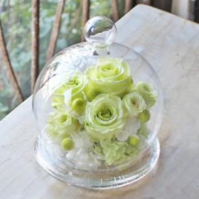 Glass Dome elegant L ライトグリーン