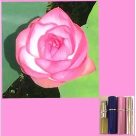 蓮の開花 フレグランス(天然香料、アロマ、癒し)