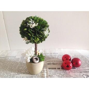 トピアリー Bruno(ブリュノ)プリザーブドフラワー 花