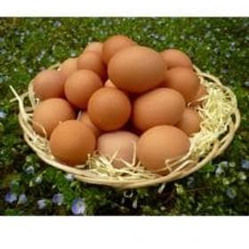 「地元ブランド」 まごころ卵40個と温泉玉子のセット