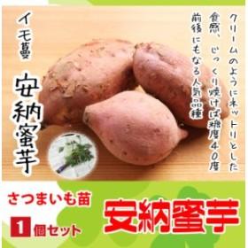 【てしまの苗】 さつまいも苗(イモヅル) 安納蜜芋 1束10本入り サツマイモ