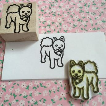 豆柴カットのポメラニアン 犬