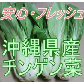 安心・フレッシュ沖縄県産野菜 チンゲン菜 2袋(約1kg)【発送 年中ですが、お待たせする場合