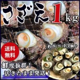 ギフト サザエ BBQ用 1kg(8~13個) さざえ つぼ焼き 中サイズ 海鮮 魚介 バーベキュー BBQ  / 送料無料 同梱不可 冷蔵配送 stp