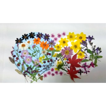 【花材料/押花】押し花カラフルセット 花扇
