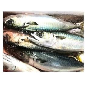 地魚急速冷凍シリーズ サバ(真サバ・ゴマサバ混じり) 4kg