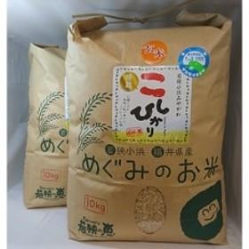 【玄米10kg×2】 福井県産 特別栽培米コシヒカリ 若狭の恵
