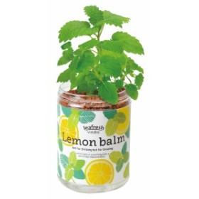 育てるグリーンペット レモンバーム 聖新陶芸 底面給水 ハーブ栽培セット ギフト 景品 プレゼント インテリア