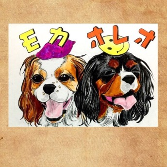 キャバリア【写真イラストタイプ】モカ&オレオ