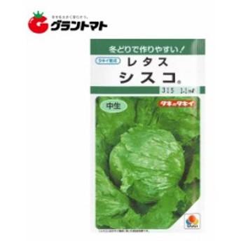レタス シスコ 小袋 野菜種子【ゆうパケット可】