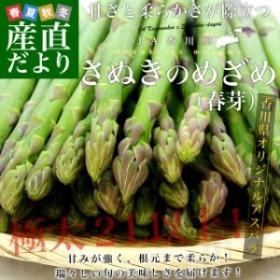 送料無料 香川県より産地直送 JA香川県 アスパラ さぬきのめざめ (春芽) 2L以上 約1キロ (20から30本前後) 産直だより
