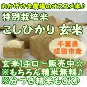 新米 『特別栽培 こしひかり』1キロ玄米 千葉県成田市『おかげさま農場産』 白米 玄米 うるち米