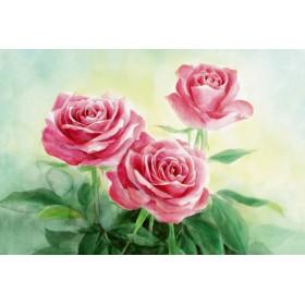 ☆ポストカード3枚セット☆101「Roses」☆