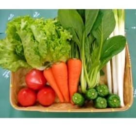 【空の駅 風和里しばやま】旬野菜の詰め合わせ「大地の恵みセット」5~6種