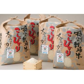 よこいファーム 特別栽培米コシヒカリB