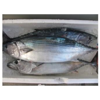 MJ001室戸産 新鮮地魚3種お造りセット